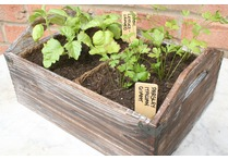 Rustic Wooden Seed Trays